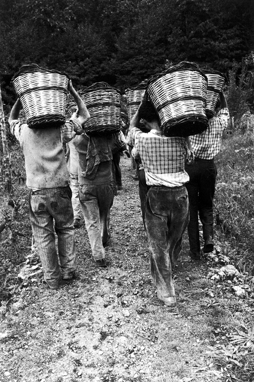 Etna, vendemmia, 1963