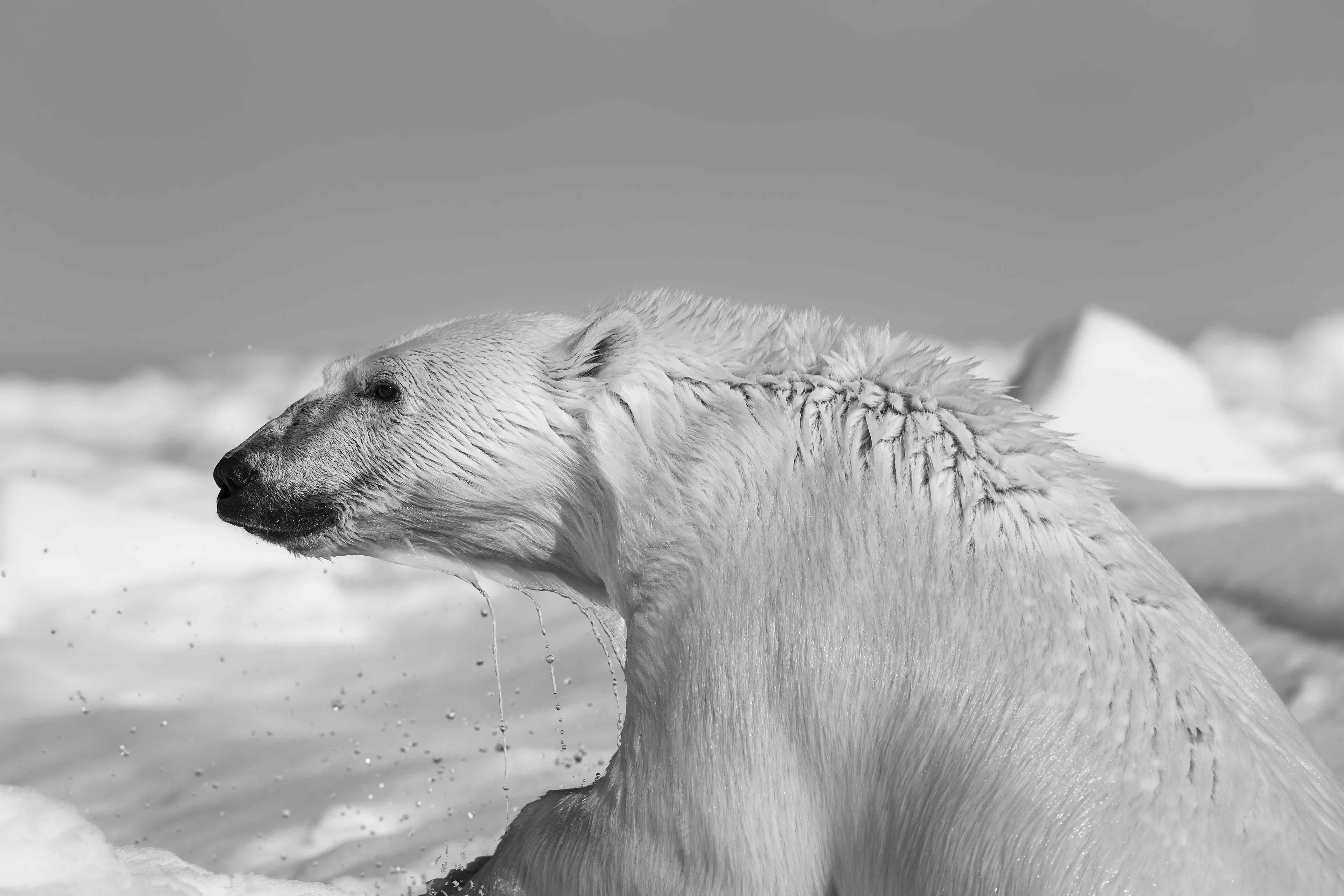 © Carsten Egevang, Groenlandia