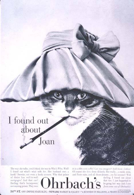 One of Walter's early advertisements, by Ad agency Doyle, Dane and Bernbach for Orbach's clothing store. Cat photograph by © Walter Chandoha