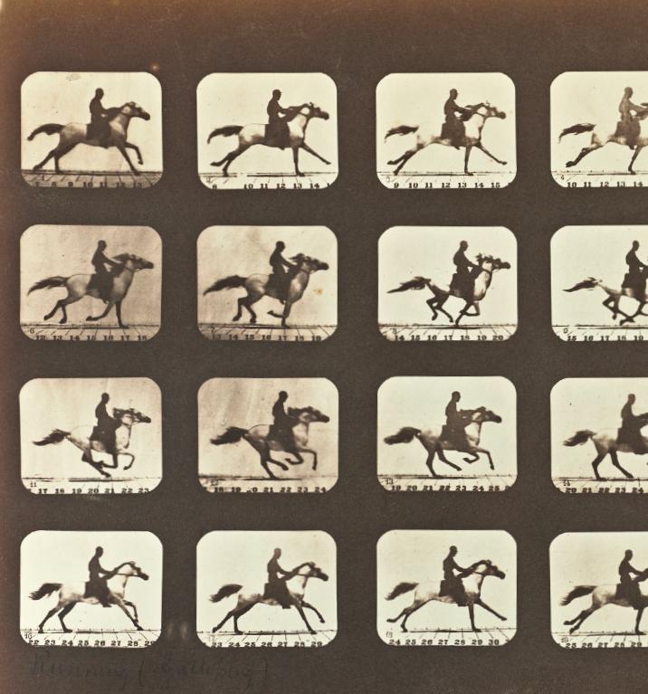 Cavallo in movimento, 1878 - © Eadweard Muybridge/ Wikimedia Commons