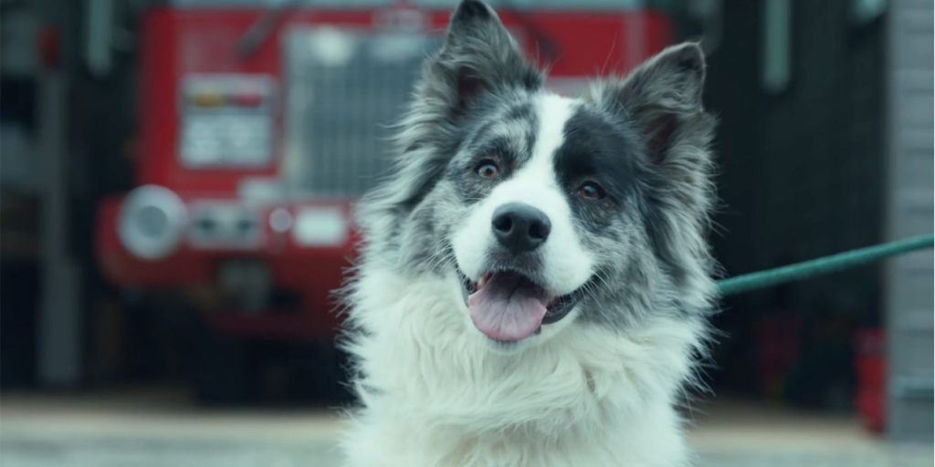 Lincoln and The Dogist seek to reunite Paradise families with their pets. Lincoln