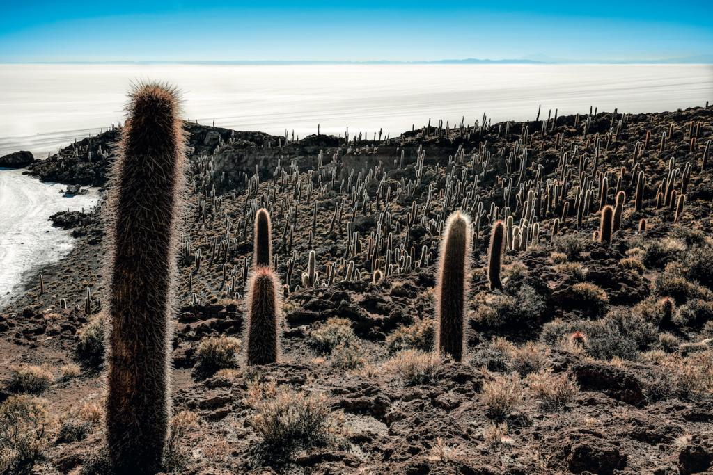 I raggi del sole illuminano i cactus dell'Isla Incahuasi.