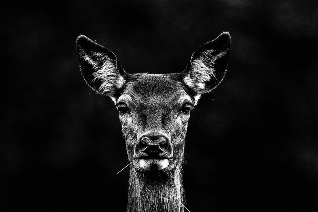 Tom Mason - animali selvaggi
