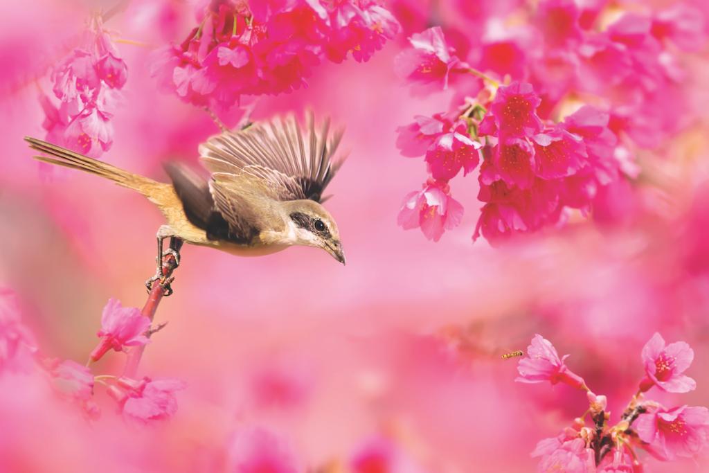 Fotografare la primavera