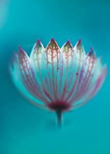 Singolo fiore