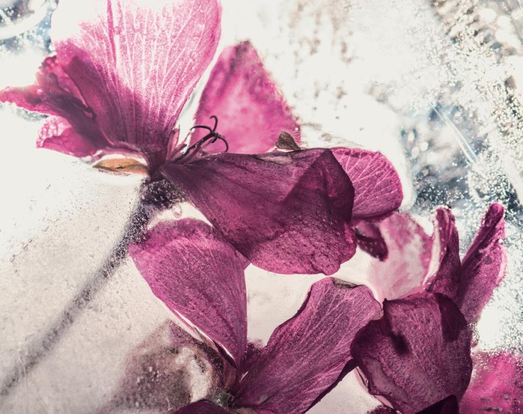 fiori nel ghiaccio