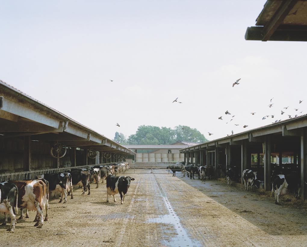 Bereguardo, Pavia. Agricoltura biodinamica.