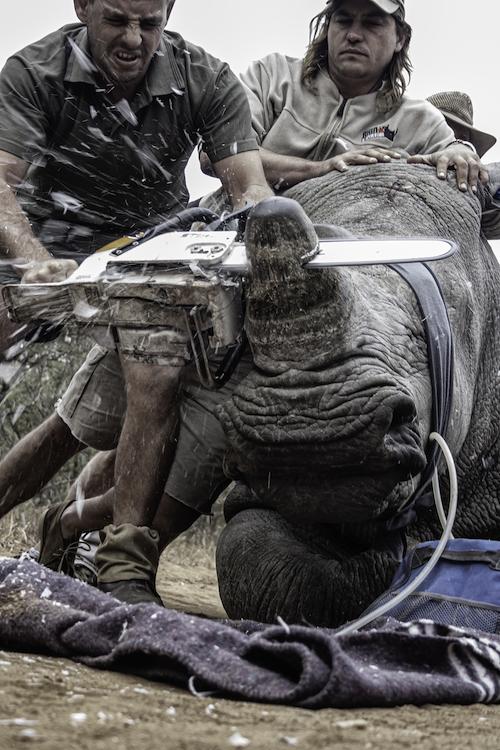 Kgaugelo Neville Ngomane ©Wild Shots Outreach
