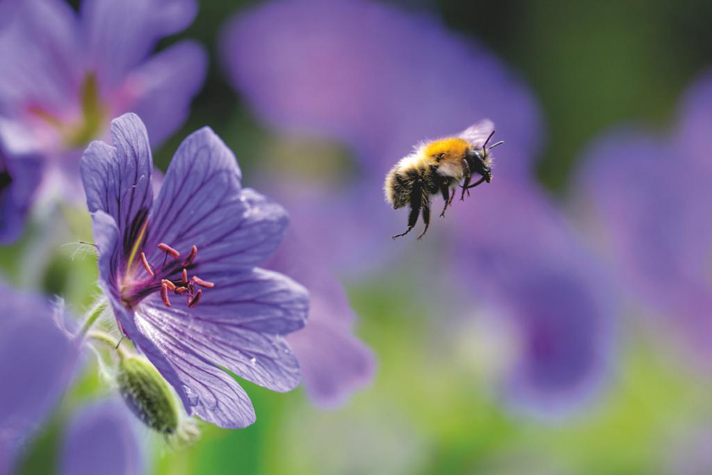 Fiore lilla con ape