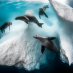 "Greg Lecoeur | Siena International Photo Awards ""Photographer of the Year 2020"""