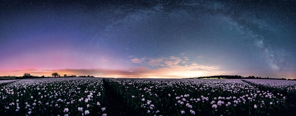 Aurora Boreale, Via Lattea, Papaveri