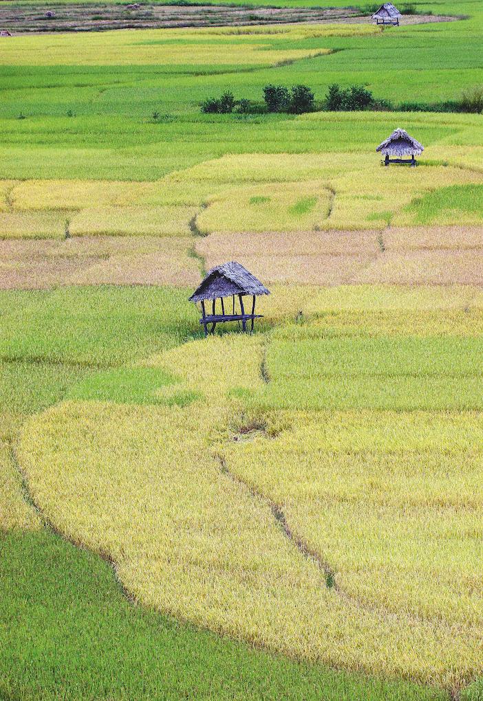 Sfumature di verde Laos, 2008 © Michele Dalla Palma