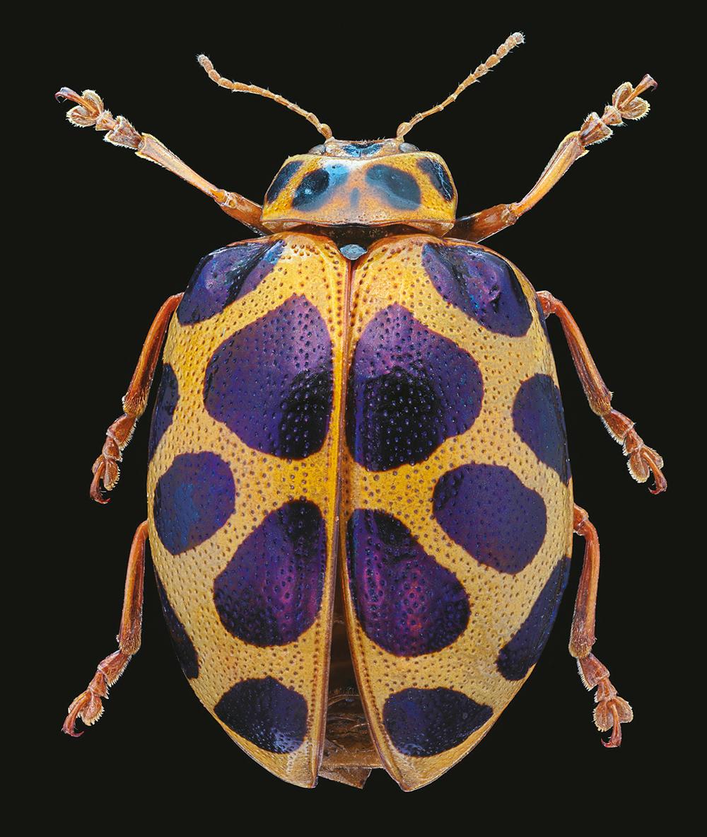 fotografare gli insetti